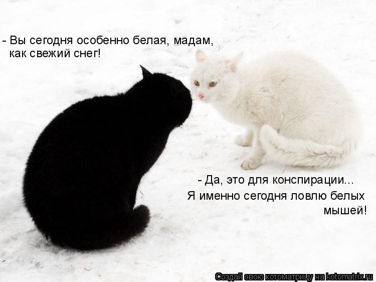Котоматрица: - Вы сегодня особенно белая, мадам, как свежий снег! - Да, это для конспирации... Я именно сегодня ловлю белых  мышей!