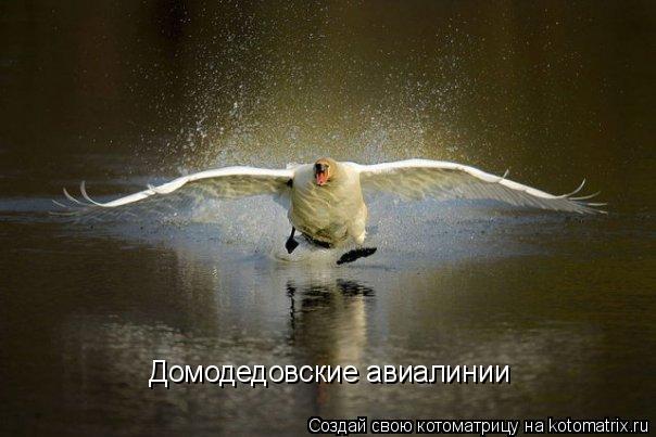 Котоматрица: Домодедовские авиалинии