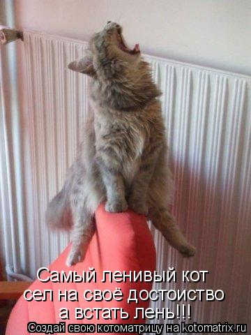Котоматрица: Самый ленивый кот сел на своё достоиство а встать лень!!!