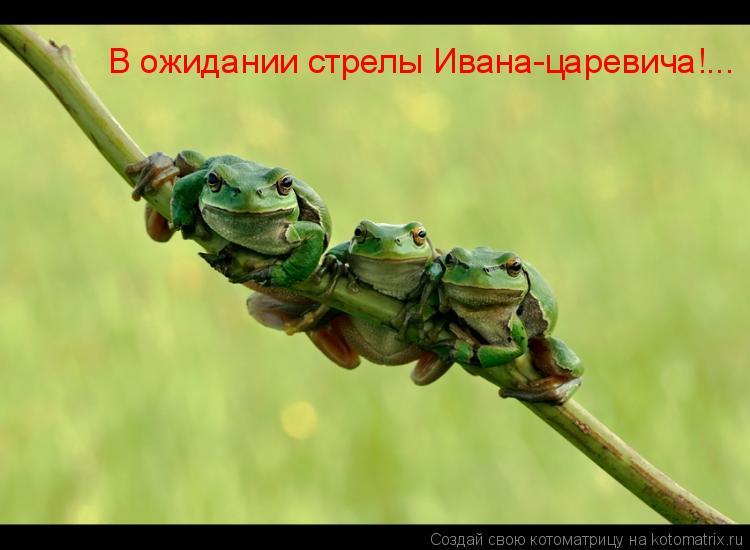Котоматрица: В ожидании стрелы Ивана-царевича!...