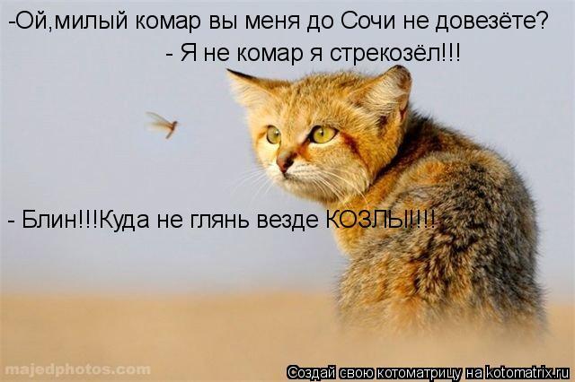 Котоматрица: -Ой,милый комар вы меня до Сочи не довезёте? - Я не комар я стрекозёл!!! - Блин!!!Куда не глянь везде КОЗЛЫ!!!!