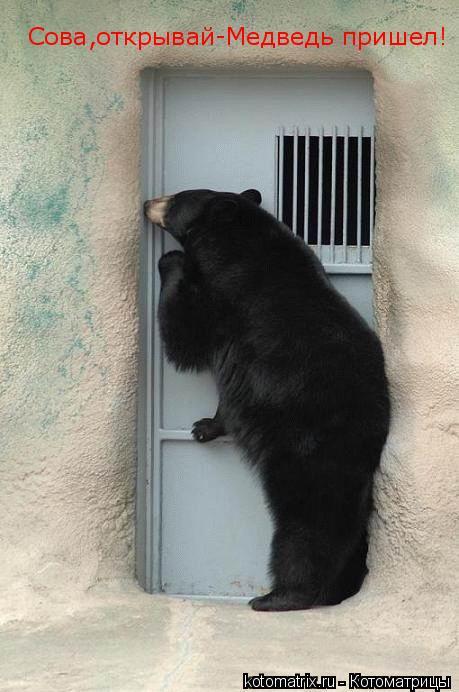 Котоматрица: Сова,открывай-Медведь пришел!