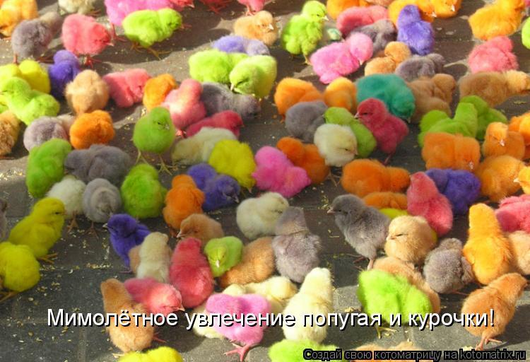 Мимолётное увлечение попугая и курочки!