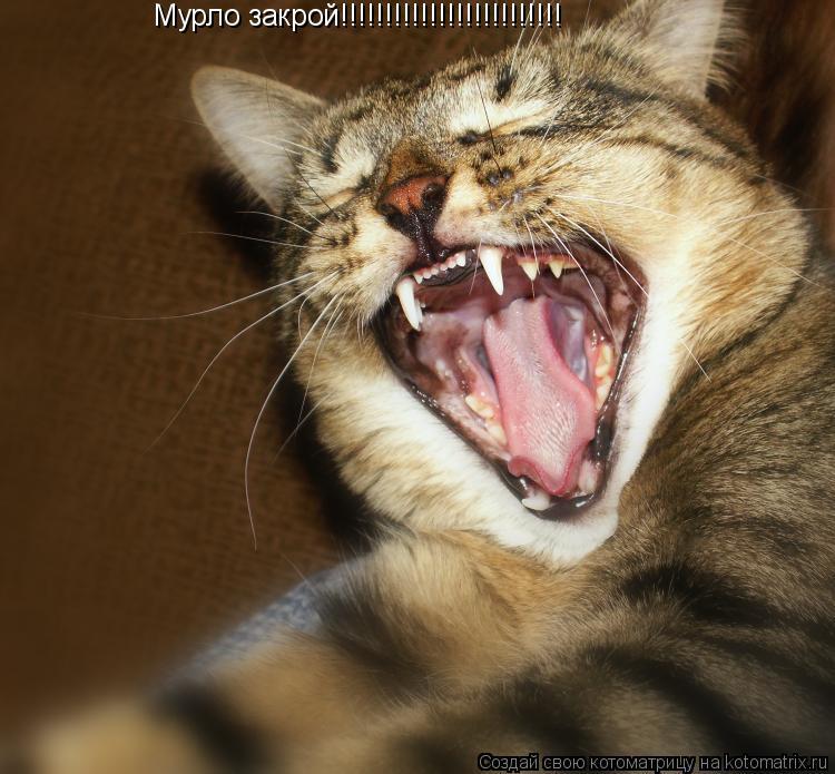 Котоматрица: Мурло закрой!!!!!!!!!!!!!!!!!!!!!!!!!