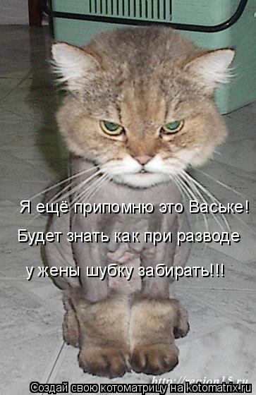 Котоматрица: Я ещё припомню это Ваське! Будет знать как при разводе  у жены шубку забирать!!!