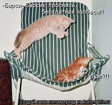 Котоматрица: -Барси- Барсик  проснись, бесплатная колбаса!! -Где?!!