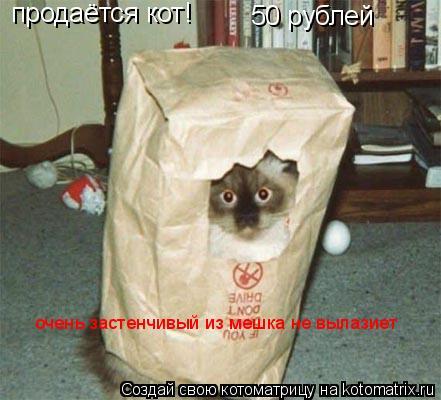 Котоматрица: продаётся кот! 50 рублей очень застенчивый из мешка не вылазиет