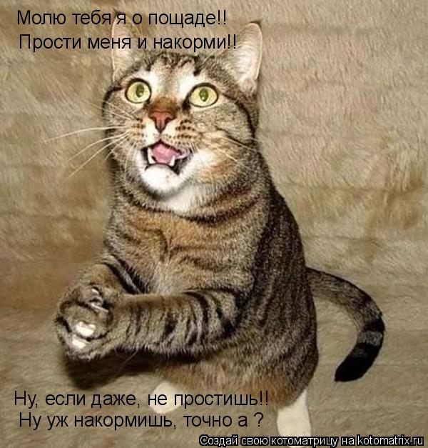 Котоматрица: Молю тебя я о пощаде!!  Прости меня и накорми!!  Ну, если даже, не простишь!!  Ну уж накормишь, точно а ?