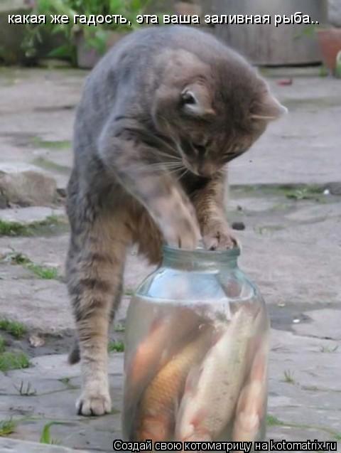 Котоматрица: какая же гадость, эта ваша заливная рыба..