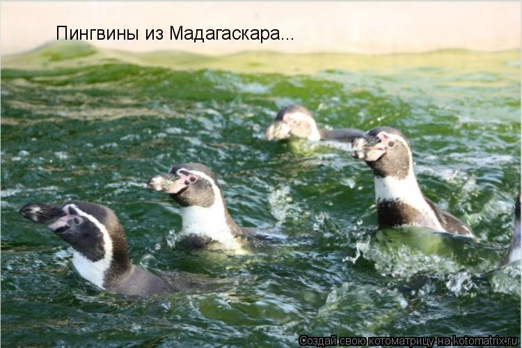 Котоматрица: Пингвины из Мадагаскара...