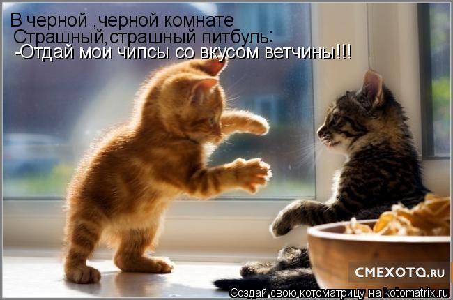 Котоматрица: В черной ,черной комнате Страшный,страшный питбуль -Отдай мои чипсы со вкусом ветчины!!! :