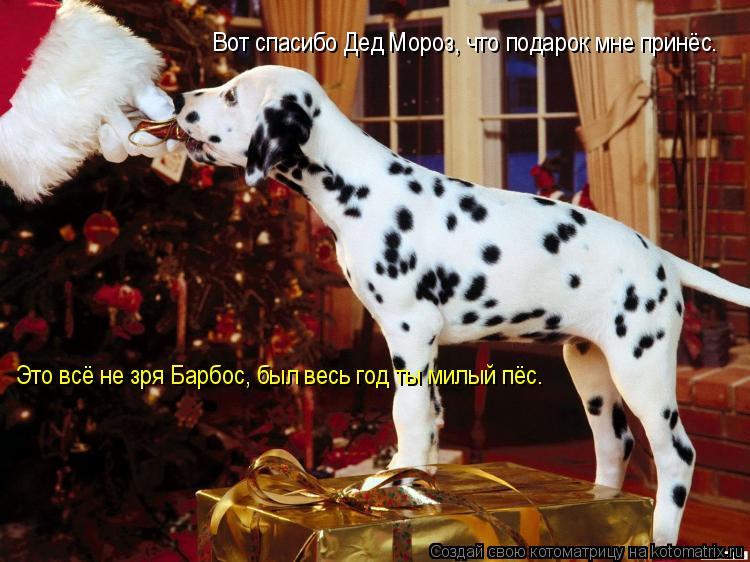 Котоматрица: Вот спасибо Дед Мороз, что подарок мне принёс. Это всё не зря Барбос, был весь год ты милый пёс.