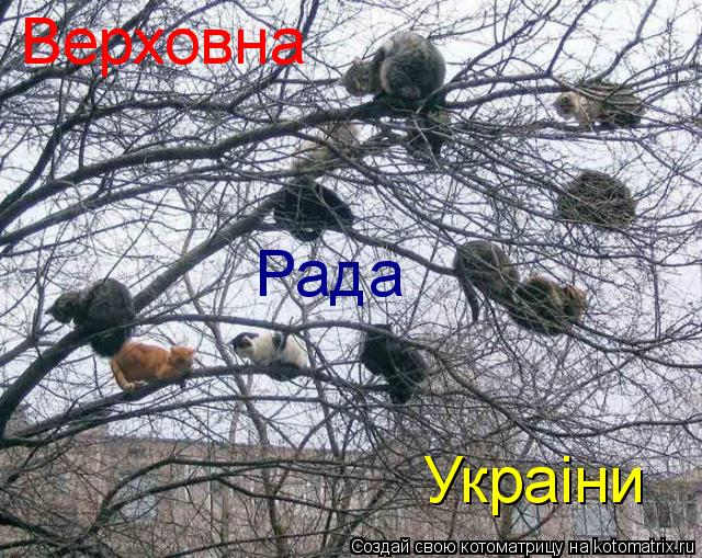 Котоматрица: Верховна Рада Украiни