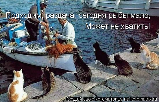 Котоматрица: Подходим, раздача, сегодня рыбы мало, Может не хватить!