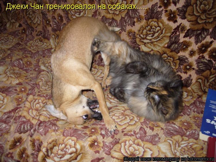 Котоматрица: Джеки Чан тренировался на собаках.....