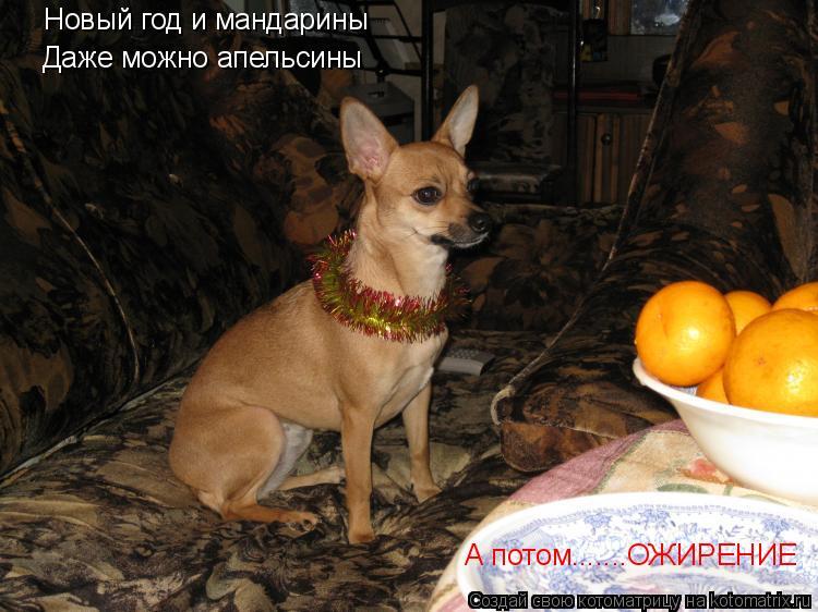 Котоматрица: Новый год и мандарины  Даже можно апельсины А потом.......ОЖИРЕНИЕ