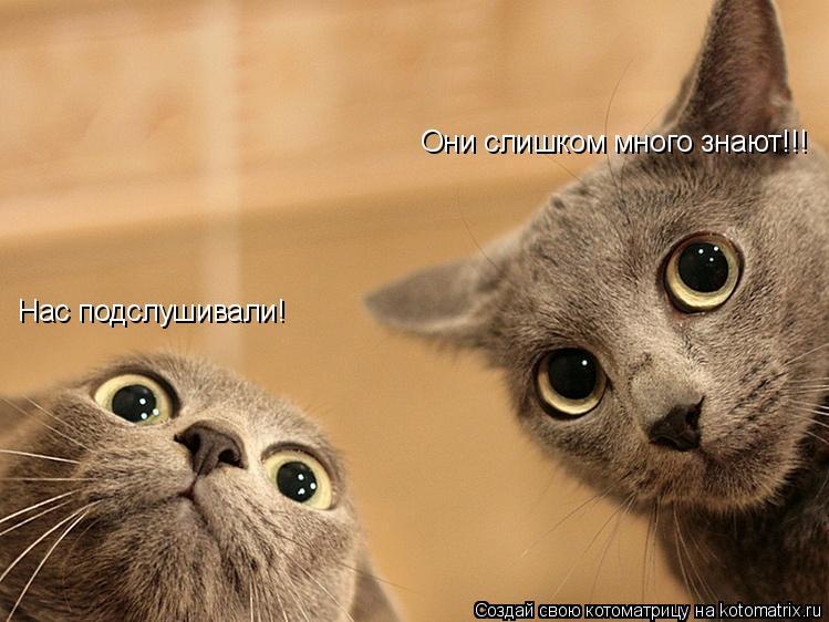 Котоматрица: Нас подслушивали! Они слишком много знают!!!