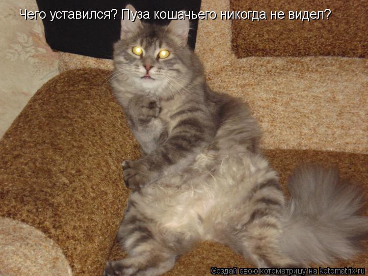 Котоматрица: Чего уставился? Пуза кошачьего никогда не видел?