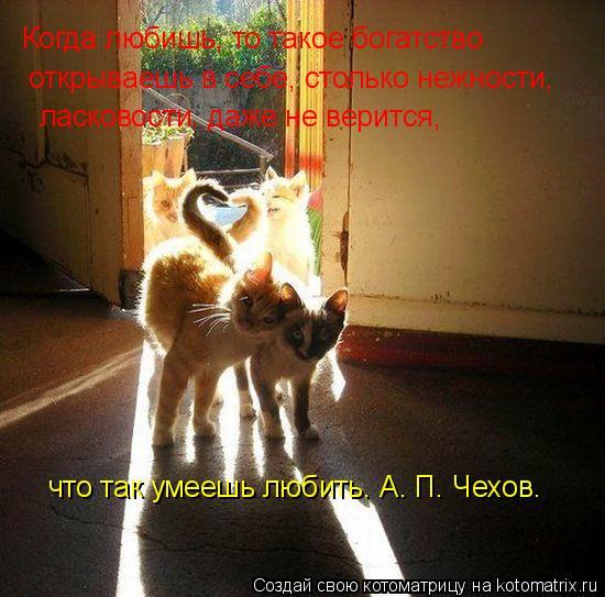 Котоматрица: Когда любишь, то такое богатство открываешь в себе, столько нежности, ласковости, даже не верится, что так умеешь любить. А. П. Чехов.