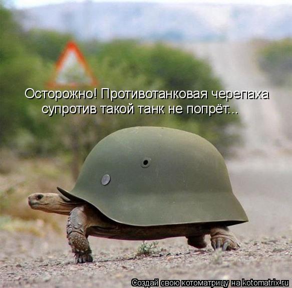 Котоматрица: Осторожно! Противотанковая черепаха супротив такой танк не попрёт...