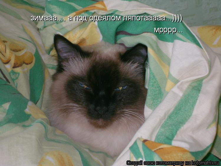 Котоматрица: зимааа..., а под одеялом ляпотааааа...)))) мрррр...