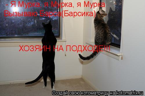 Котоматрица: - Я Мурка, я Мурка, я Мурка Вызываю Барса(Барсика) ХОЗЯИН НА ПОДХОДЕ!!!