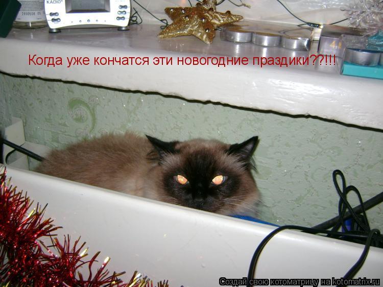 Котоматрица: Когда уже кончатся эти новогодние праздики??!!!