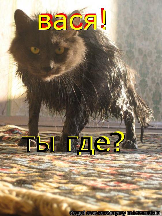 Котоматрица: вася! вася! ты где? ты где?