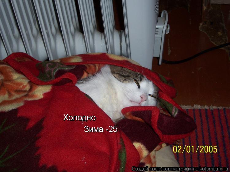 Котоматрица: Холодно Зима -25
