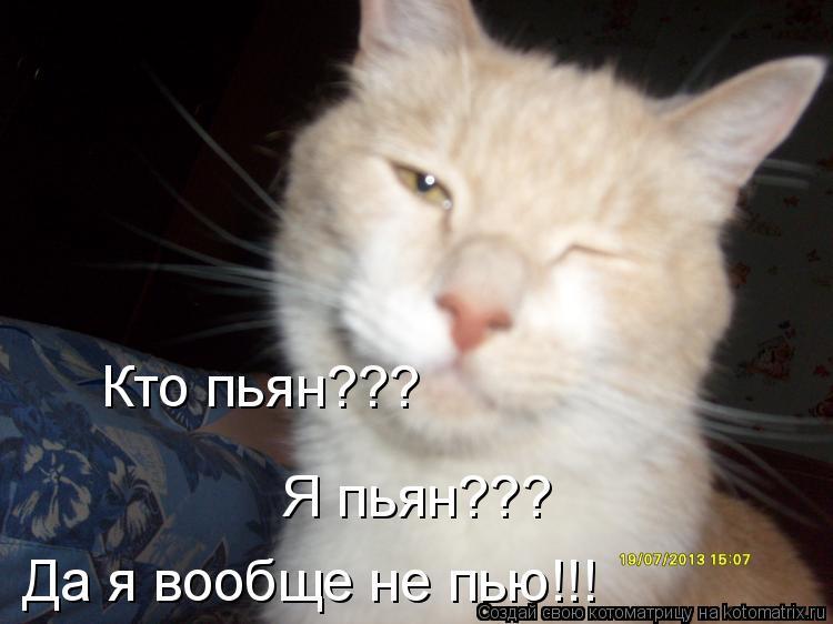 Котоматрица: Кто пьян??? Я пьян??? Да я вообще не пью!!!