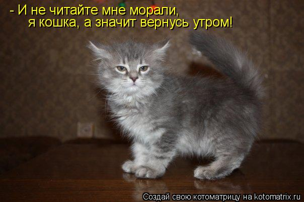 Котоматрица: - И не читайте мне морали, я кошка, а значит вернусь утром!