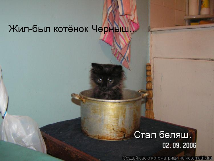 Котоматрица: Жил-был котёнок Черныш... Стал беляш.