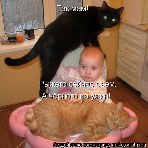 Котоматрица: Так мам! Рыжего сейчас съем. А чёрного на ужин!