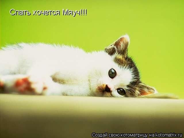 Котоматрица: Спать хочется Мяуч!!!