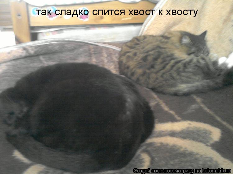 Котоматрица: так сладко спится хвост к хвосту