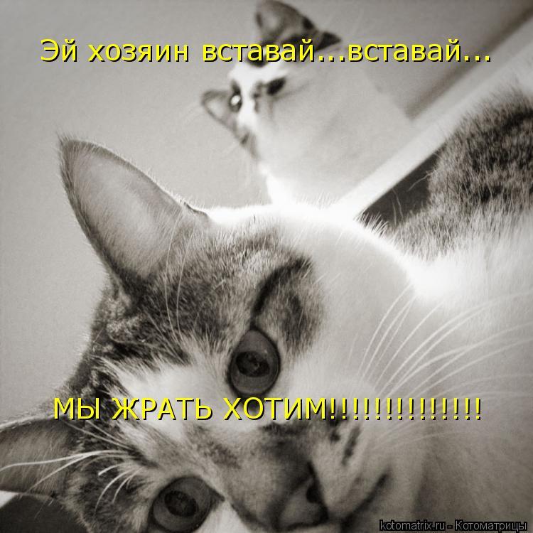 Котоматрица: Эй хозяин вставай...вставай... МЫ ЖРАТЬ ХОТИМ!!!!!!!!!!!!!!