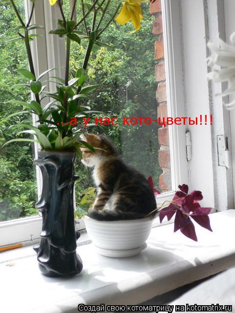 Котоматрица: ...а у нас кото-цветы!!!