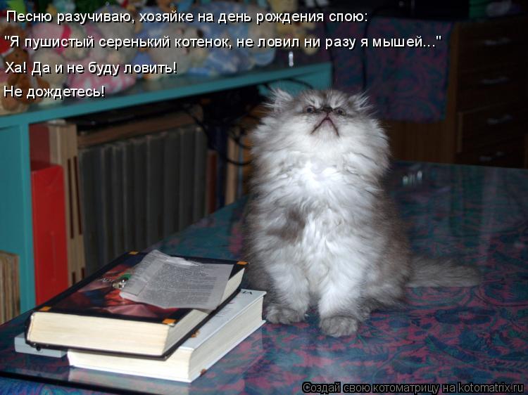 """Котоматрица: Песню разучиваю, хозяйке на день рождения спою: """"Я пушистый серенький котенок, не ловил ни разу я мышей..."""" Ха! Да и не буду ловить!  Не дождетес"""