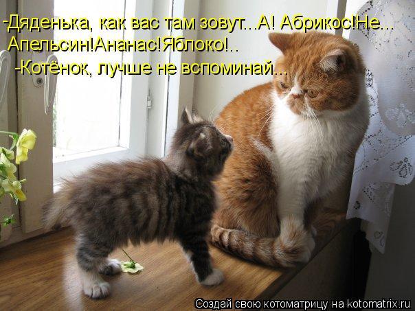 Котоматрица: Дяденька, как вас там зовут...А! Абрикос!Не... Апельсин!Ананас!Яблоко!.. - -Котёнок, лучше не вспоминай...