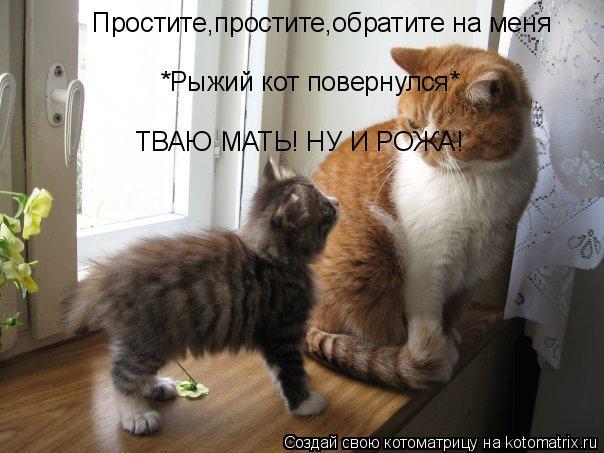 Котоматрица: Простите,простите,обратите на меня *Рыжий кот повернулся* ТВАЮ МАТЬ! НУ И РОЖА!