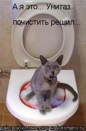 Котоматрица: А я это... Унитаз  почистить решил...