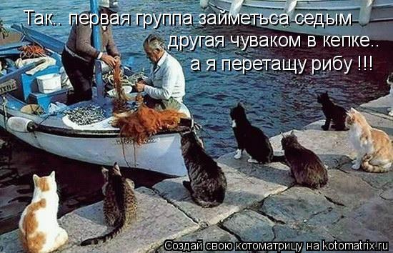 Котоматрица: Так.. первая группа займетьса седым другая чуваком в кепке.. а я перетащу рибу !!!