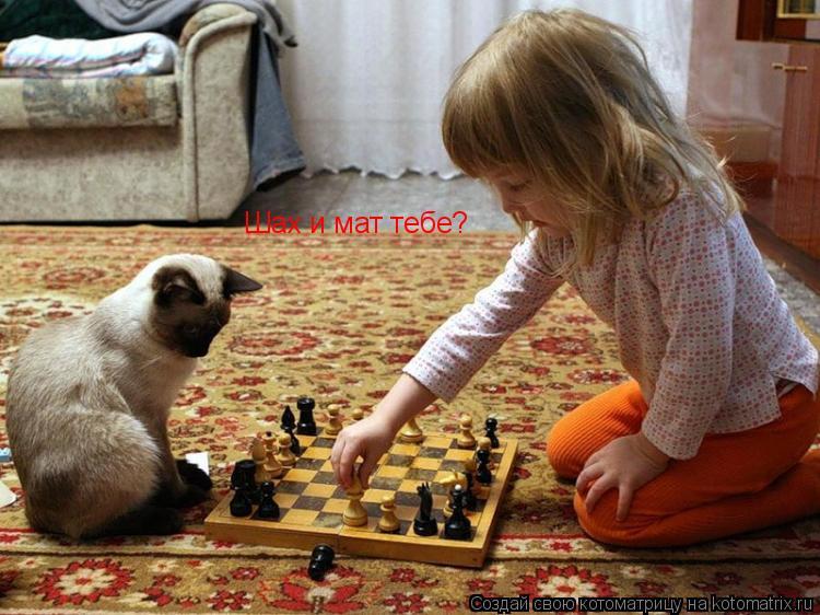 Котоматрица: Шах и мат тебе?