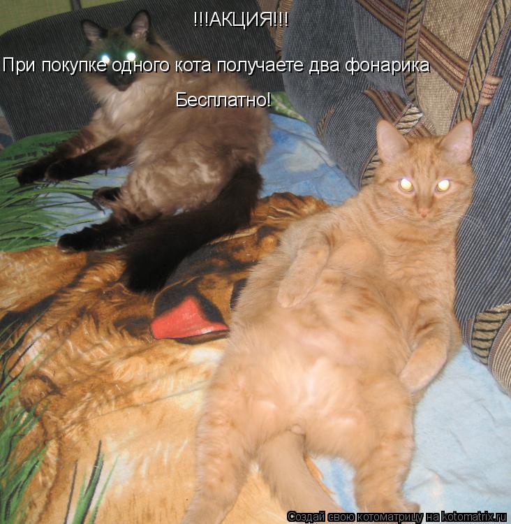 Котоматрица: !!!АКЦИЯ!!! При покупке одного кота получаете два фонарика Бесплатно!