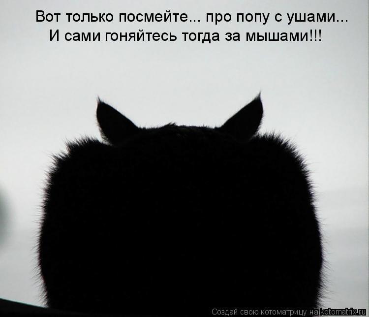 Котоматрица: И сами гоняйтесь тогда за мышами!!! Вот только посмейте... про попу с ушами...