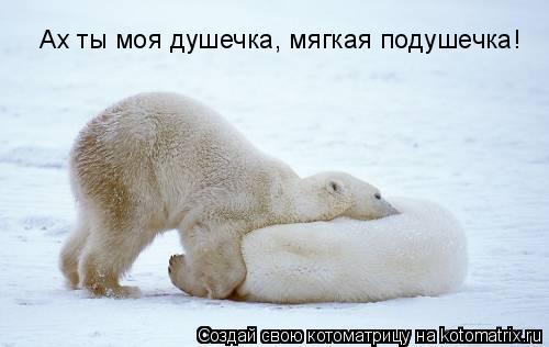 Котоматрица: Ах ты моя душечка, мягкая подушечка!