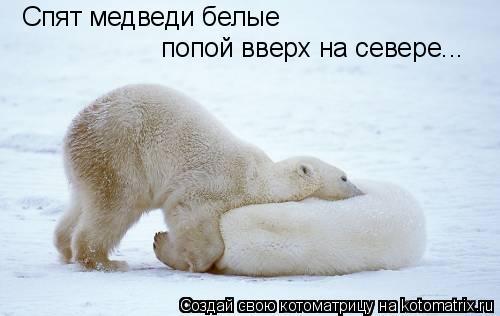 Котоматрица: Спят медведи белые попой вверх на севере...