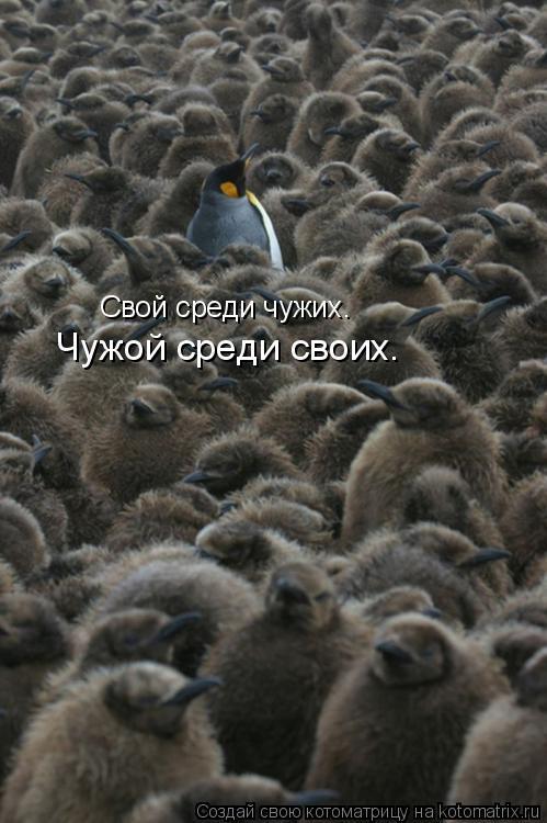 Котоматрица: Свой среди чужих… Чужой среди своих…