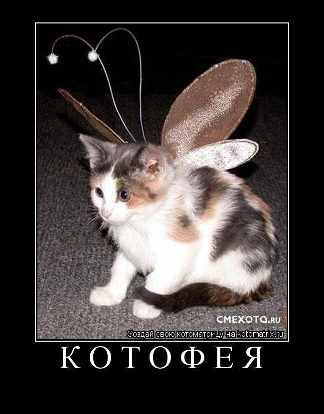 http://kotomatrix.ru/images/lolz/2010/01/05/Lf.jpg