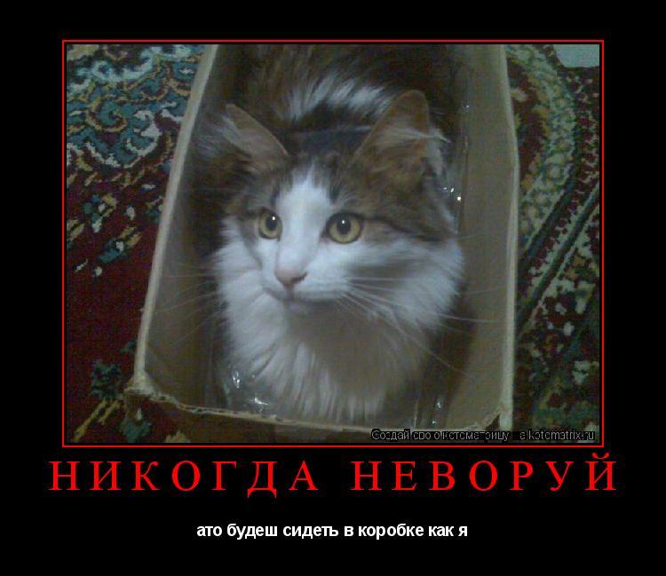 Котоматрица: Никогда неворуй ато будеш сидеть в коробке как я